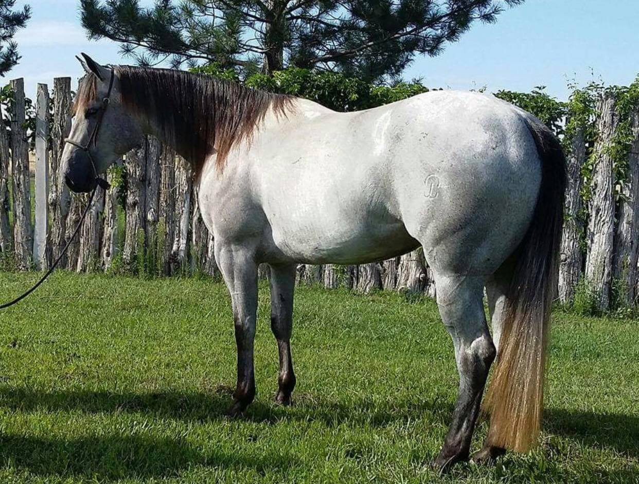 Best Fit- Horses For Sale